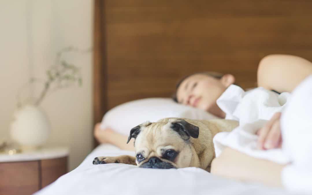 Top Oils for Better Sleep